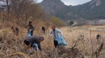 영동군 남성리 벚꽃길 내달 점등식 앞두고 길목 정비