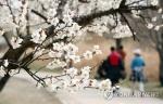 충북 완연한 봄…낮 최고기온 15∼18도