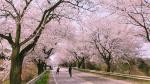 봄 꽃길 걸어요