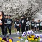 6일…2019 대청호 벚꽃길 마라톤대회