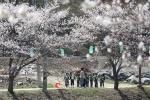 꿈나무도 웃음꽃 만발…영동 벚꽃문화제 올해 첫 개최