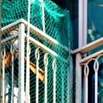 베란다 점령한 비둘기떼…주민들 고통