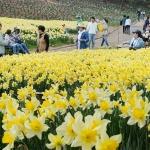 봄의 전성기