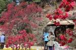 봄내음 가득·꽃피운 축제들… 사람들도 활짝